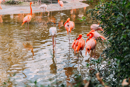 flock of flamingos walking in pond in zoological park, barcelona, spain