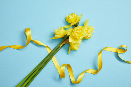 top view of beautiful yellow daffodils and yellow satin ribbon on blue