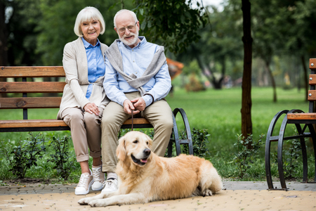 happy senior couple sitting on wooden bunch and adorable golden retriever dog lying nearby