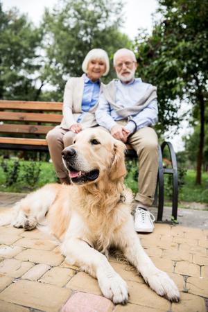 selective focus of golden retriever dog lying on paved sidewalk near smiling senior couple sitting on wooden bench Stok Fotoğraf