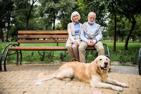 happy senior couple sitting on wooden bench with golden retriever dog lying nearby
