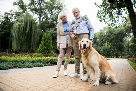 happy senior couple with golden retriever dog in park Stok Fotoğraf - 119522124