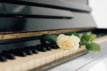 selective focus of beautiful yellow rose on piano keys