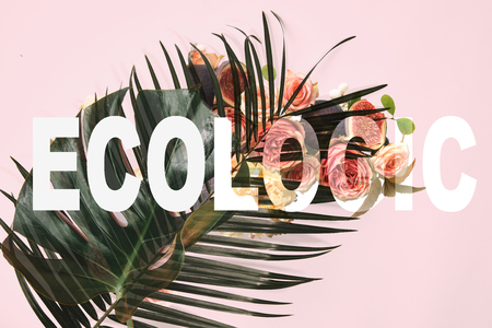 monstera leaves on pink background with roses illustration and ecologic lettering