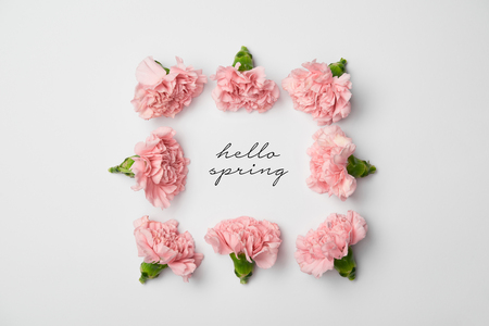 top view of floral frame made of pink carnations on white background with hello spring lettering