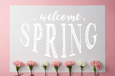 top view of pink and white carnation flowers and card with welcome spring lettering on pink background