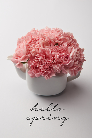 pink carnation flowers in white teapot on grey background with hello spring lettering Stock Photo