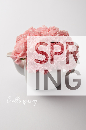 pink carnation flowers in white teapot on grey background with spring illustration Stock Photo