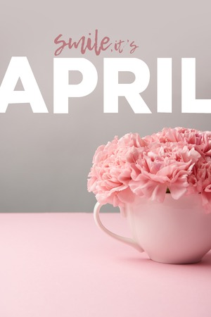 pink carnation flowers in cup on grey background with april lettering