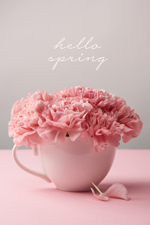 pink carnation flowers in cup on grey background with hello spring lettering Foto de archivo