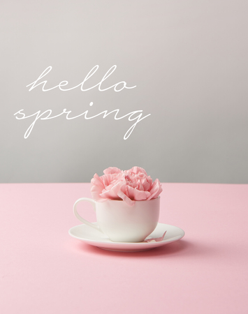 pink carnation flowers in white cup on saucer on grey background with hello spring lettering Фото со стока