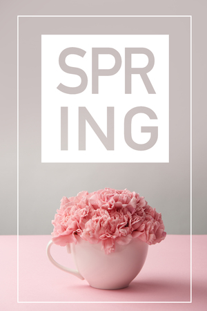 pink carnation flowers in white cup on grey background with spring lettering 版權商用圖片