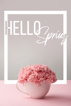 pink carnation flowers in white cup on grey background with hello spring lettering