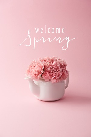 pink carnation flowers in white teapot on pink background with welcome spring lettering
