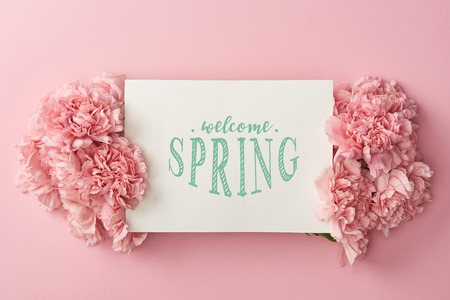 top view of greeting card with welcome spring lettering and pink carnations on pink background Stock Photo