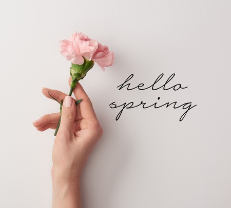 partial view of woman holding pink carnation on grey background with hello spring lettering Stock Photo