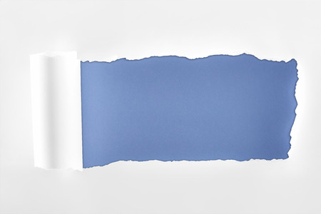 tattered textured white paper with rolled edge on blue background
