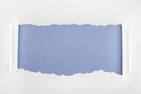 ripped white paper with rolled edges on blue background Фото со стока