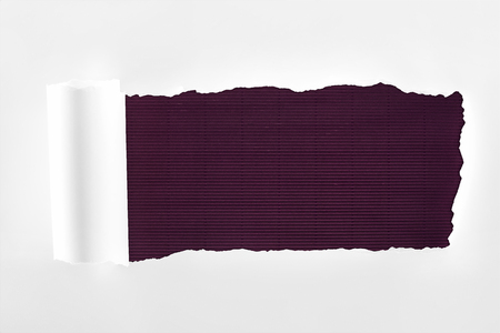tattered textured white paper with rolled edge on purple background Фото со стока