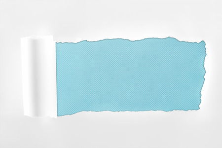 ragged textured white paper with rolled edge on light blue background Reklamní fotografie - 120049447