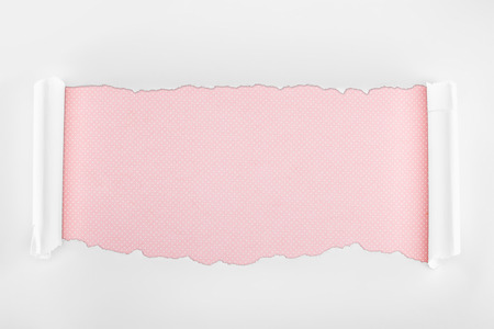 ragged textured white paper with curl edges on pink background Фото со стока