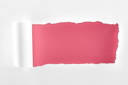 tattered textured white paper with rolled edge on crimson background Фото со стока