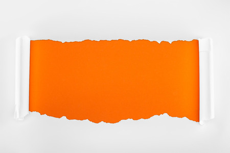 ripped white textured paper with rolled edges on orange background Фото со стока