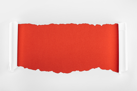 ripped white textured paper with curl edges on red background Banco de Imagens