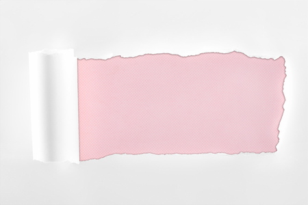 ragged textured white paper with rolled edge on pink background Фото со стока