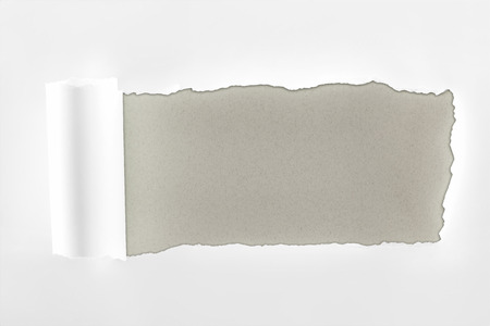 tattered textured white paper with rolled edge on grey background Banco de Imagens