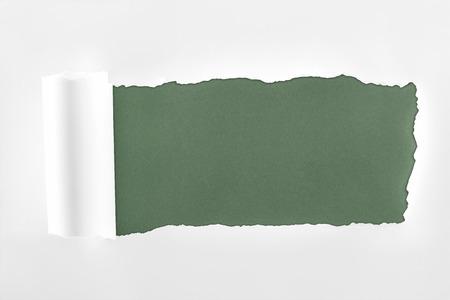 ragged textured white paper with rolled edge on dark green background Reklamní fotografie