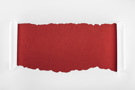 ragged textured white paper with curl edges on burgundy background Фото со стока
