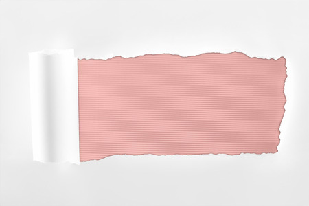 tattered textured white paper with rolled edge on pink background