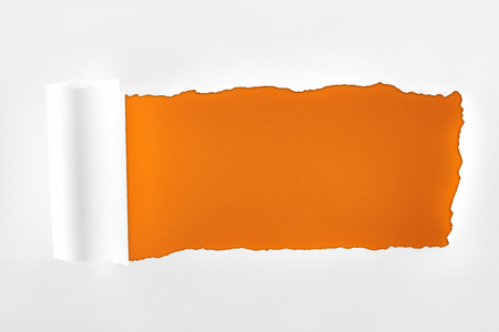 tattered textured white paper with rolled edge on orange background Фото со стока