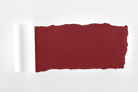 ragged textured paper with rolled edge on burgundy background