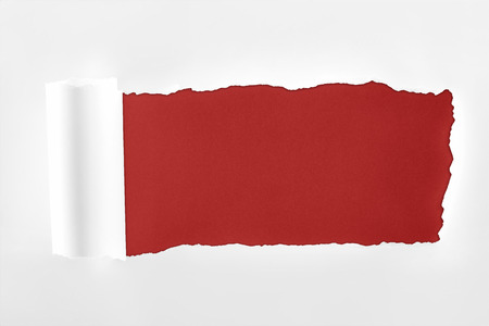 ragged textured white paper with rolled edge on burgundy background Фото со стока