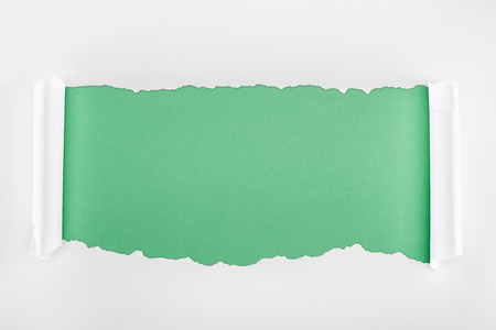 ripped textured white paper with curl edges on light green background
