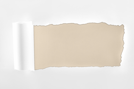 tattered textured white paper with rolled edge on ivory background