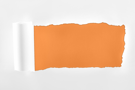 ragged textured white paper with rolled edge on orange background Фото со стока