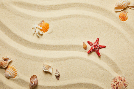 top view of red starfish and seashells on sandy beach in summertime