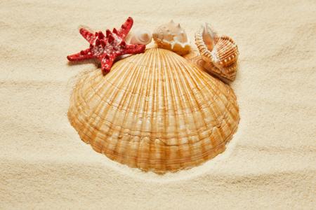 selective focus of seashells near red starfish on beach with golden sand Фото со стока
