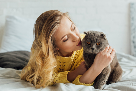 beautiful girl in knitted sweater lying in bed and stroking scottish fold cat Фото со стока