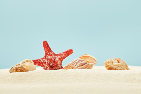 selective focus of red starfish and seashells on sandy beach isolated on blue