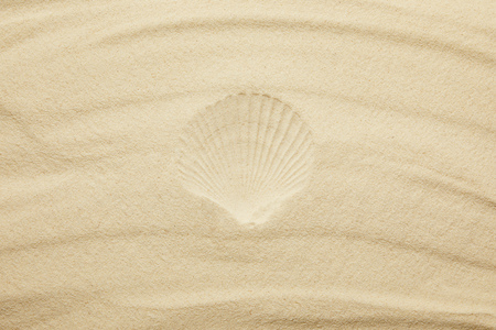 top view of sandy beach with seashell print in summertime