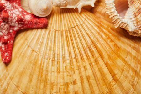 selective focus of orange seashells near red starfish in summertime Фото со стока