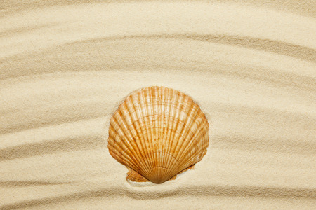orange seashell on curve sandy beach in summertime Stock Photo