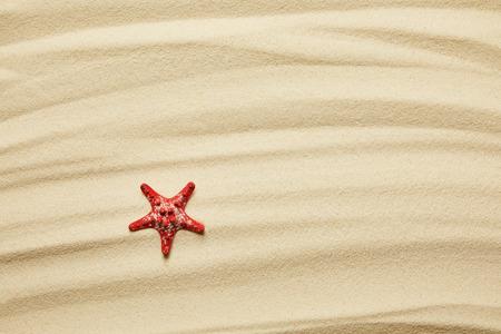 red starfish on golden sandy beach in summertime