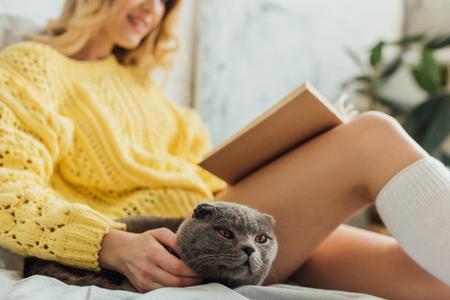 cropped view of young woman reading book while lying in bed with scottish fold cat