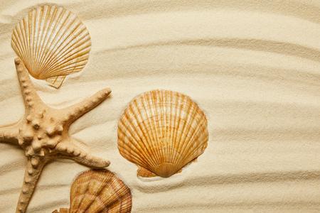 orange seashells near starfish on sandy beach in summertime Stock Photo