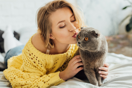 beautiful girl in knitted sweater pouting lips and hugging adorable scottish fold cat at home 스톡 콘텐츠